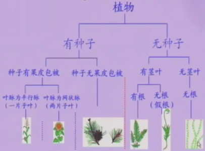《根据生物的特征进行分类》